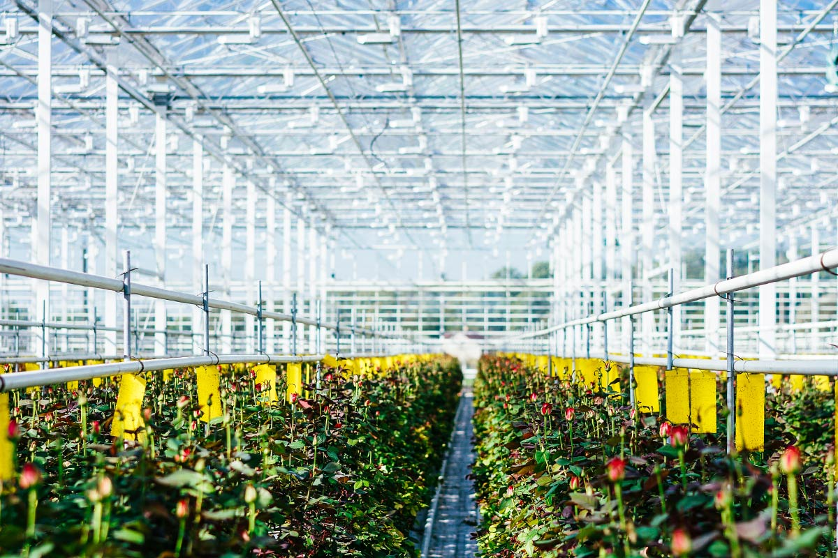 Agricultural Lighting Solutions